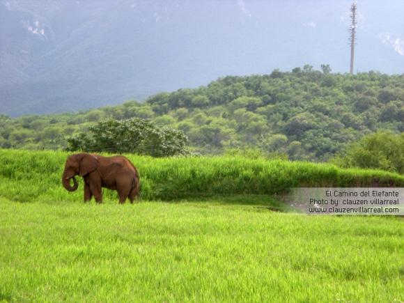 El camino del Elefante | clauzenvillarreal.com